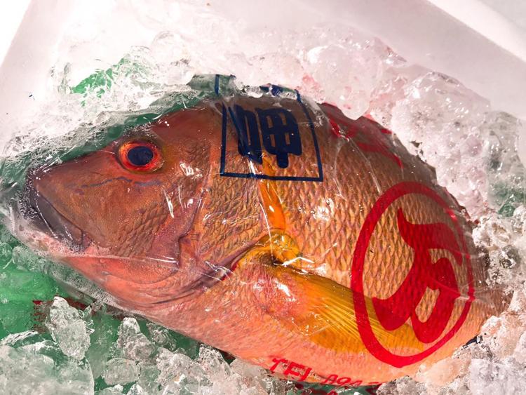 好きなお魚ランキングトップ5に入った魚
