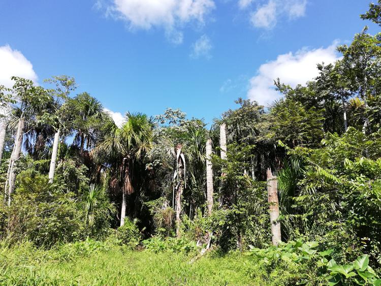 按田優子さんがペルーのジャングルで食べた、ある日のご飯