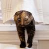 夢のリノベアパート。猫用トイレも手づくり。