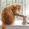 プエルトリコからの保護猫、レディー・ガガが嫌い!?