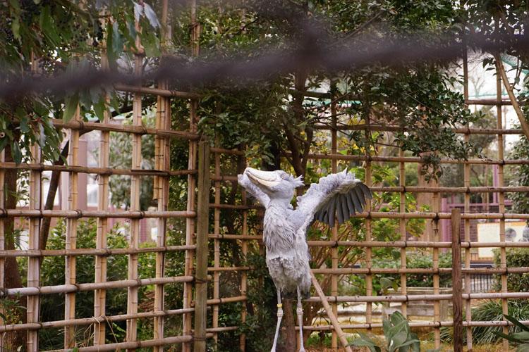 動かない鳥『ハシビロコウのすべて』