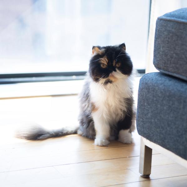 猫の数だけ物語がある「猫と暮らすニューヨーク」まとめ読み