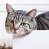 ブルックリンのオス猫、ある日家までついてきた