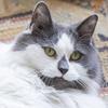 よくしゃべる保護猫。犬派の夫を、猫派に変える