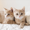 郊外の一軒家、2匹の子猫に家族みんなで恋に落ちた