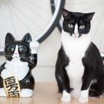 インスタグラムをにぎわす、ブルックリンの男子&猫コンビ