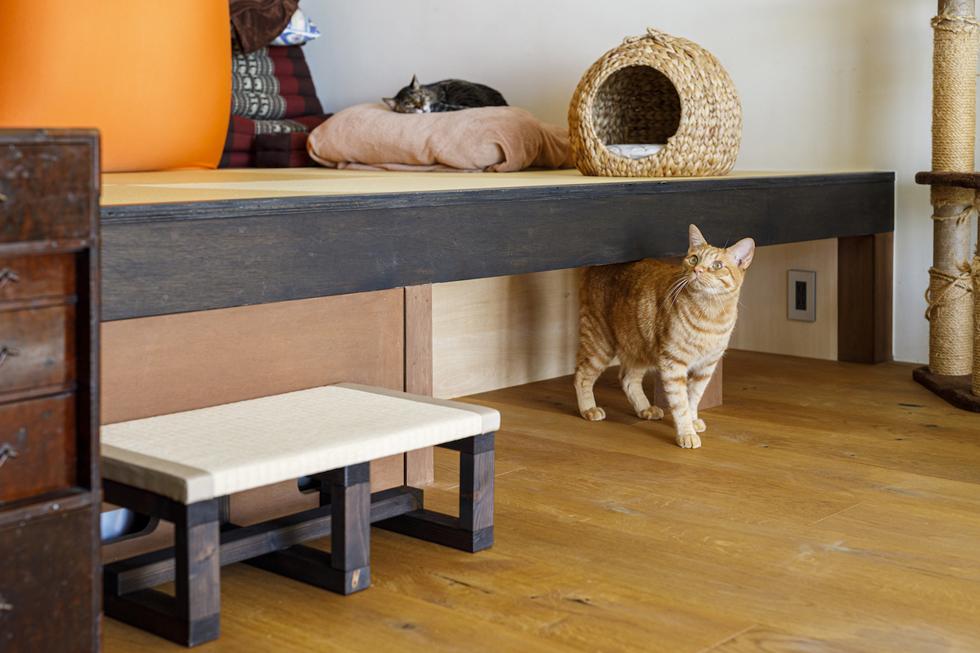 長年の家への不満をリノベーションで解決! 猫4匹と快適に暮らす