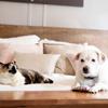 保護猫と保護犬、野良猫。すべてに惜しみない愛を