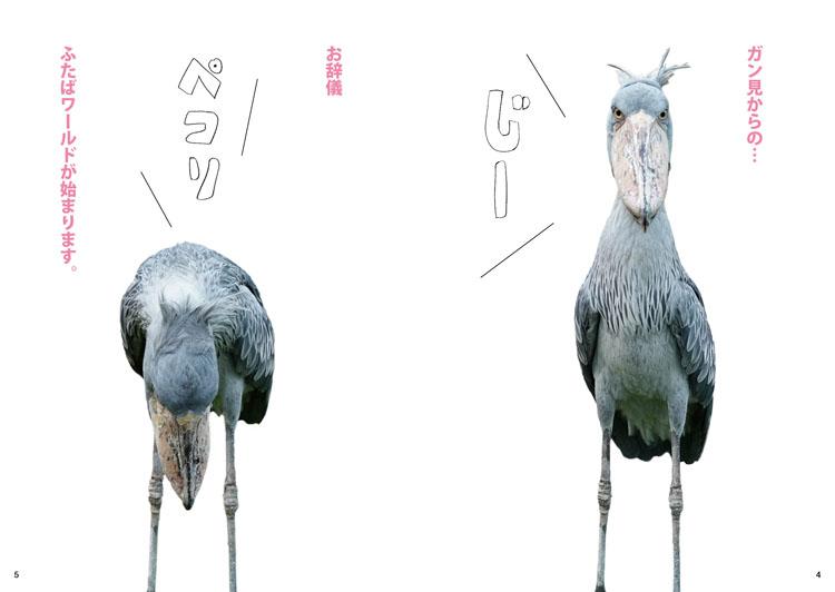 ハシビロコウ界のアイドル『ふたば PHOTOBOOK』