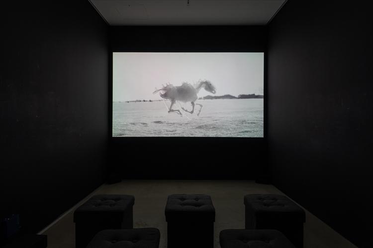 3Dプリントの「やど」を背負ったヤドカリが美術館で見られる!?AKI INOMATAの個展