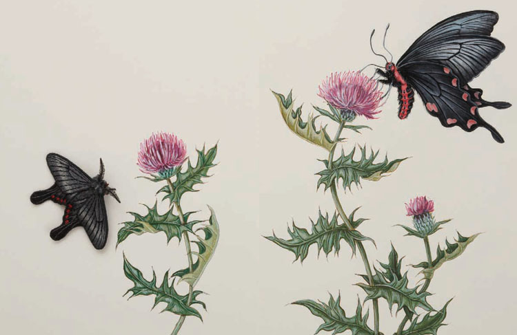 刺繡で魅せる『蛾売りおじさんのめくるめく蛾の世界』