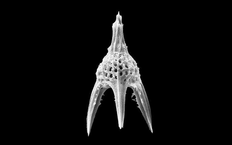 5億年前からの美しさ『ほうさんちゅう ちいさな ふしぎな 生きものの かたち』