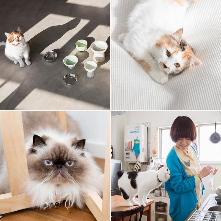 まとめて読みたい!「猫と暮らすインテリア」 記事一覧