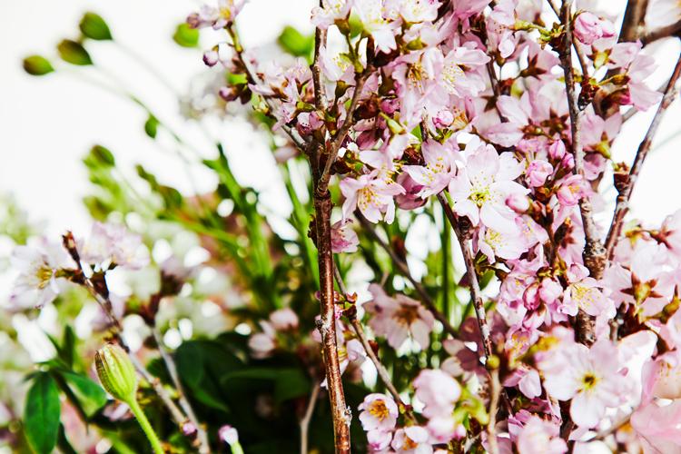桜の季節に思い出す「この子は僕の宝物」と言ってくれた父へ