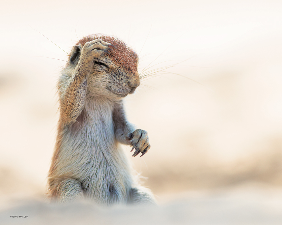 """決定的瞬間にほっこり。愛くるしい野生動物の""""お宝""""写真集"""