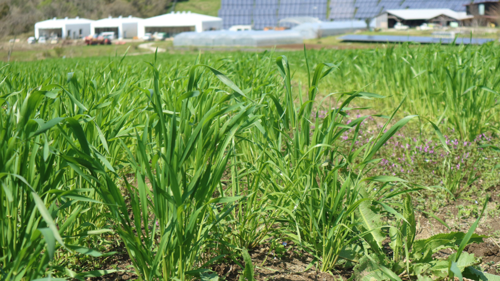 小麦も牛乳も敷地内で。とれたて素材を詰め込んだ「クルックムッシュ」/KURKKU FIELDS