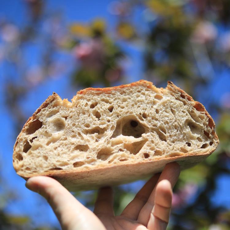 パンで季節を教えてくれる。花、果物、野菜……自然の恵みを酵母に/タロー屋【通販あり】