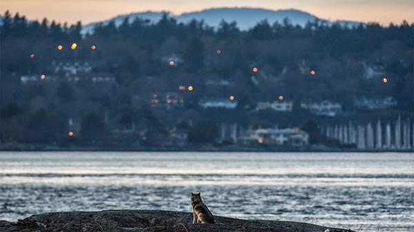 美しき孤高のオオカミTakayaの死から思うこと