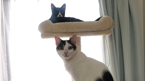 猫には正義の味方がいる。