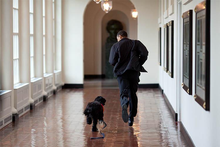愛犬「ボー」とホワイトハウスでたわむれるオバマ