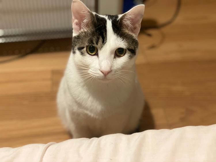 猫には正義の味方がいる。byふく&はな(飼い主・たなかともみさん)