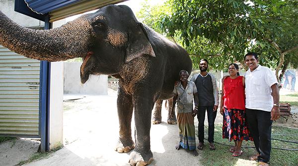 「象に乗る」の悲しい一面。ある夫妻の挑戦