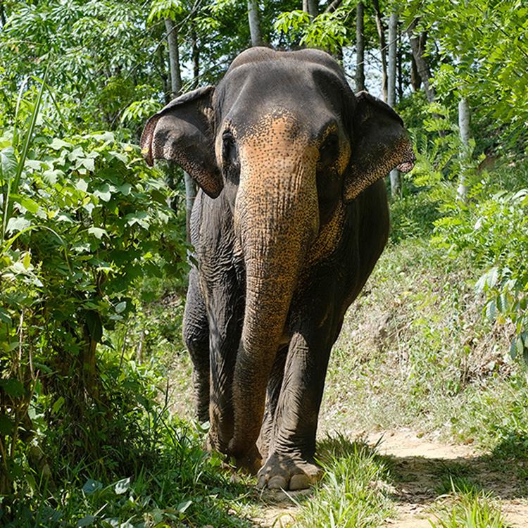 象と歩いて知る、命のいとおしさ