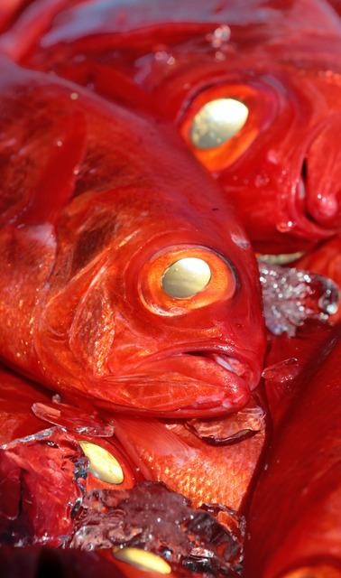 水揚げされたばかりのキンメダイ。ぎらりと光る目はまさに「金」だ=高知県室戸市の室戸魚市場