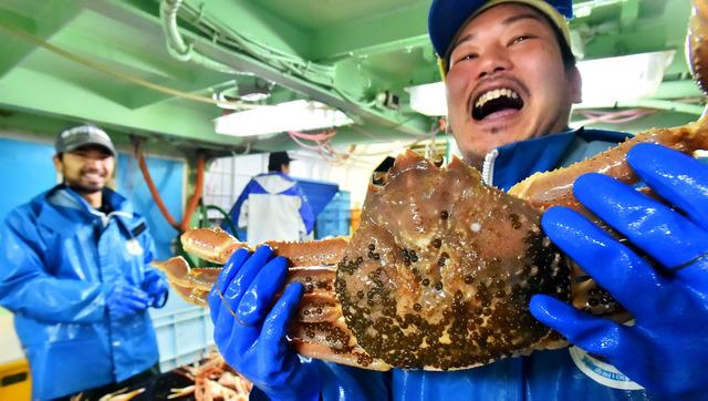 漁の解禁日に捕れた1・7キロ超のカニ。初日のご祝儀相場で10万円で競り落とされた=兵庫県沖の日本海
