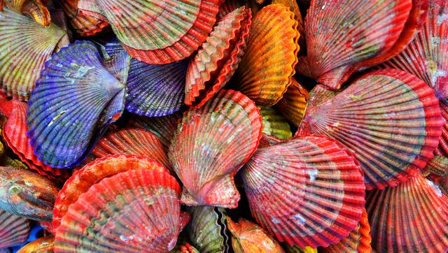 表面の付着物や汚れを機械で落とすと、色とりどりの貝殻が現れた=島根県海士町