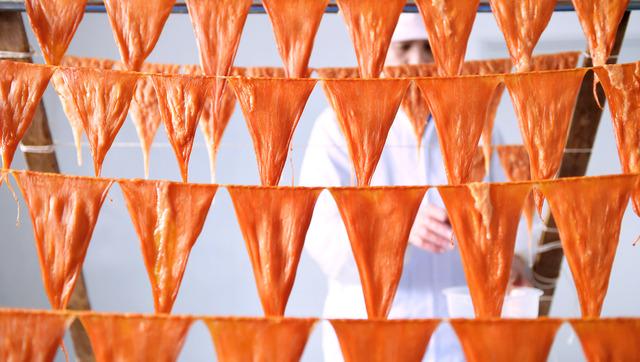 ひも状のナマコの卵巣を縄につり下げると逆三角形になる。これを乾かすと「くちこ」ができる=石川県七尾市