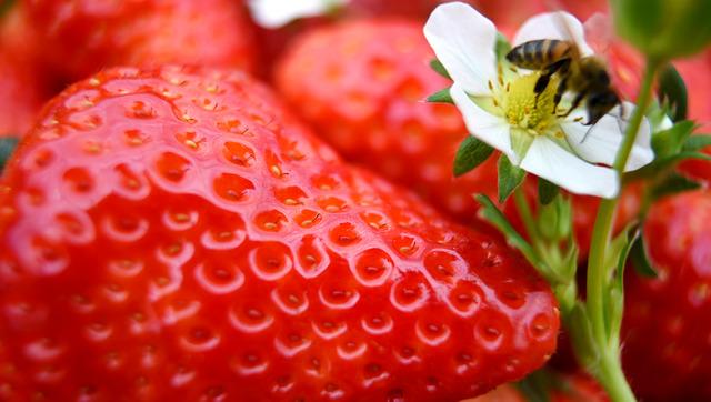 色鮮やかな「古都華」。ハウス内はミツバチの羽音でにぎやかだ=奈良市