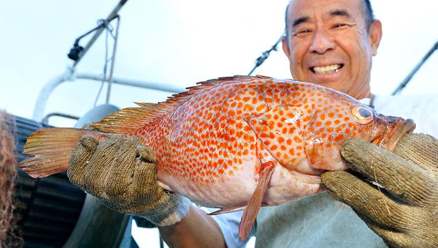 大きなアコウを引き揚げ、笑顔の高田威さん=堺市の堺出島漁港沖、高橋一徳撮影