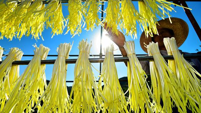 収穫された黄ニラは、天候を見ながら天日干しされる=岡山市北区