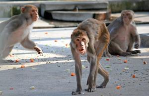 「堺 猿」の画像検索結果