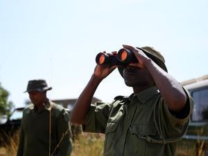 ゾウ、密猟絶てず激減 ヘリで群れ探し、残らず射殺