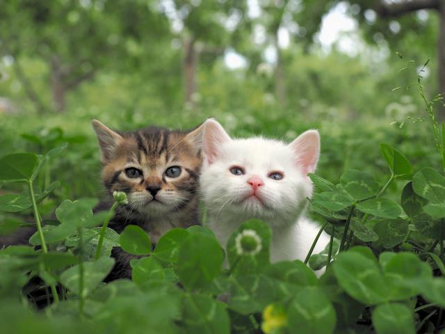 岩合光昭さん「猫が興味を持って...