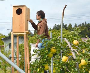 リンゴ作り「救世主」はフクロウ ネズミ退治で大活躍