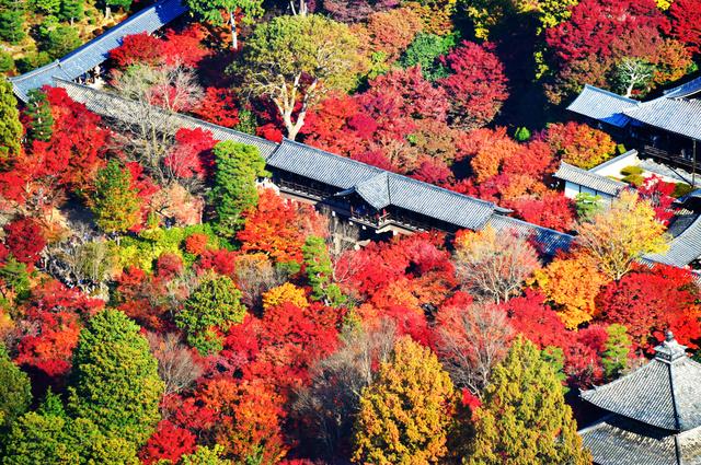 京都・東福寺の紅葉が見ごろ 2千...