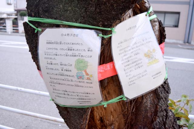 【木】神戸の小4生から悲痛なメッセージ「木を切るのをやめて下さい」この願いは届くのだろうか  [597533159]->画像>9枚