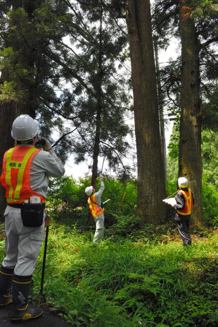【環境】半世紀ぶりに調査したら日光の杉並木、7割が衰えや枯死 特別天然記念物 ->画像>11枚