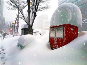 福井市、積雪130センチ 「56豪雪」以来37年ぶり
