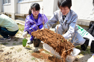 愛知)県立国府高校、ポプラ復活企画進行中