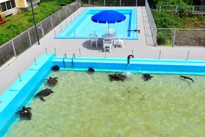 高知)むろと廃校水族館がオープン 室戸市:朝日新聞デジタル