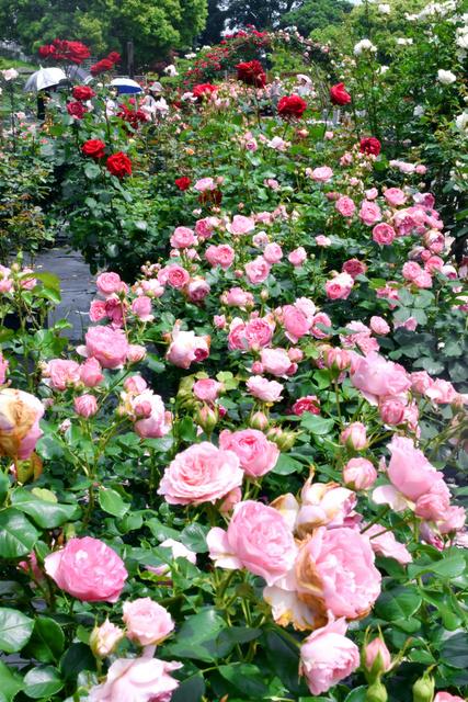 愛さ れる 花 【花言葉】「愛」にまつわる花 (20日)