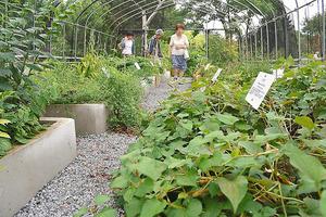 薬用植物、栽培技術の確立へ 千...
