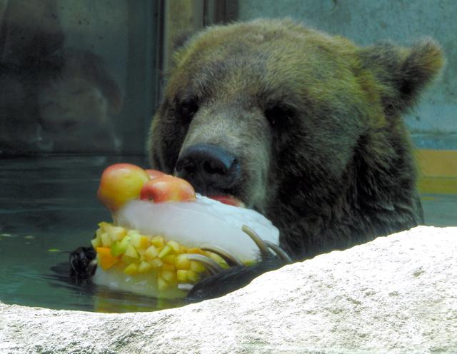 【埼玉】「冷やしタヌキ」始めました うどん?動物園の話です YouTube動画>1本 ->画像>18枚