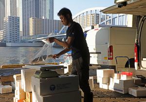 朝日の差し込む「岸壁」で配達する魚を仕分ける南光貴さん=樫山晃生撮影