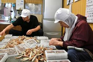シャコの加工作業。カラをむき、オスとメスを分け、サイズをそろえてトレーに並べる=愛知県南知多町の豊浜漁港で