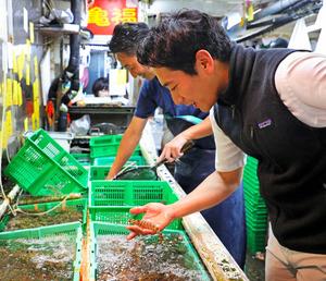 エビ専門の仲卸で車エビを選ぶ松乃鮨の手塚良則さん=樫山晃生撮影